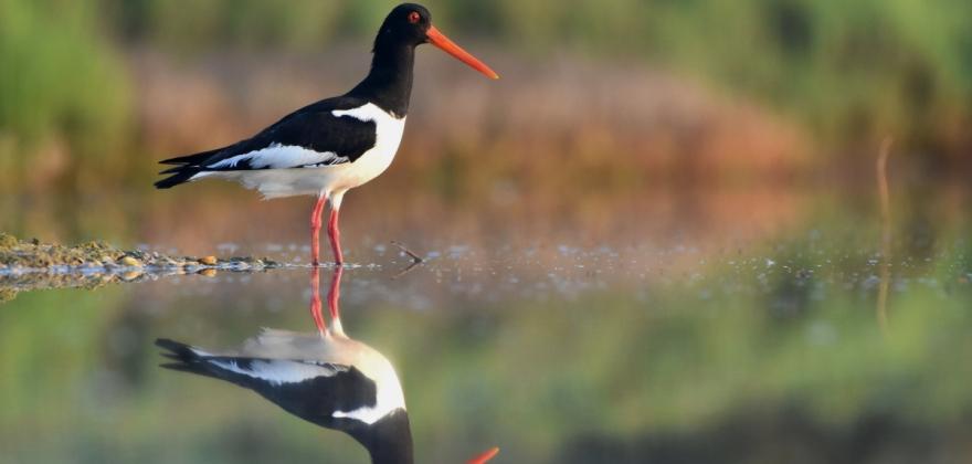 Rallye photo sur les oiseaux de l'étang de l'Or